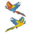 macaw parrots vector image
