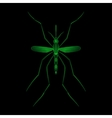 Fever mosquito species aedes aegyti isolated on vector image