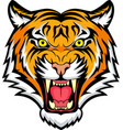 tiger anger vector image vector image