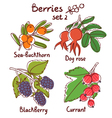 Berries set 2 vector image