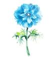 Cyanic watercolor anemone  Beautiful flower vector image
