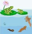 Frog metamorphosis cartoon vector image