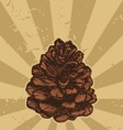 pinecone on grunge vector image