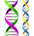 Dna strands vector image