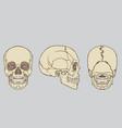 human skull anatomy pack vector image