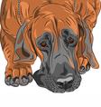 sad dog Great Dane vector image