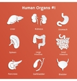 Set of paper icons with human internal organs vector