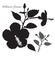 Hibiscus flower Black silhouette on white vector image