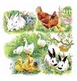 Little fluffy cute watercolor ducklings chickens vector image