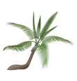 coco nut tropical exotic high detailed palm vector image