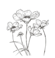 Hand drawn with cosmos flowers vector image