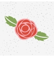 floral ornament design vector image