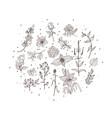 floral botanical vector image