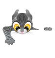 curious funny kitten climbs barrier vector image