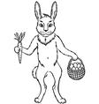 bunny contour vector image vector image