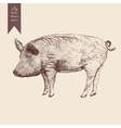 a pig Hand drawn Vintage vector image
