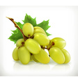 Bunch of grapes icon vector image vector image
