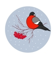 Christmas - bullfinch with vector image