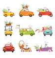 cute little bunnies driving vintage car decorated vector image