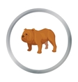 English bulldog icon in cartoon style isolated on vector image
