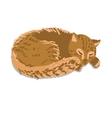 Sleeping cat vector image