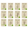 hand drawn culinary herbs and spices vector image