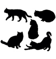 posing cats vector image