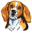 beagle head vector image vector image