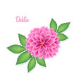 isolated realistic dahlia flower with green leaves vector image