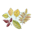 Sketch of autumn leaves for your design vector image