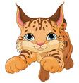 Lynx vector image vector image