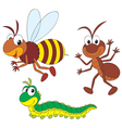 bee ant and caterpillar vector image