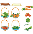 Collection Vegetables Cucumber Tomato Cabbage and vector image
