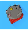 Grey Cat vector image
