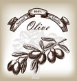 olive tree branch hand drawn in sketch style vector image