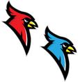 CARD JAY BIRD vector image