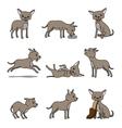 Cartoon chihuahua dog character vector image