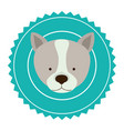 emblem dog hunter city icon vector image