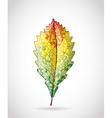 Autumn colorful leaf vector image
