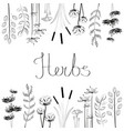 hand drawn set with black and white herbs vector image