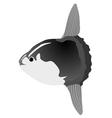 sunfish vector image