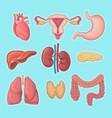 human internal organs heart female reproductive vector image