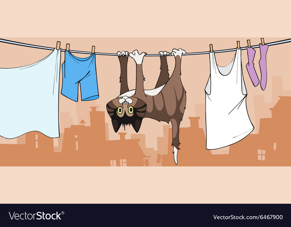 Cartoon cat drying on the clothesline vector