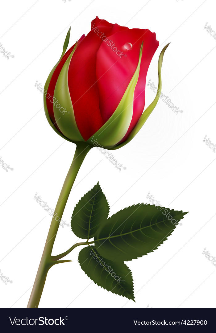 Flower background with a beautiful red rose with vector