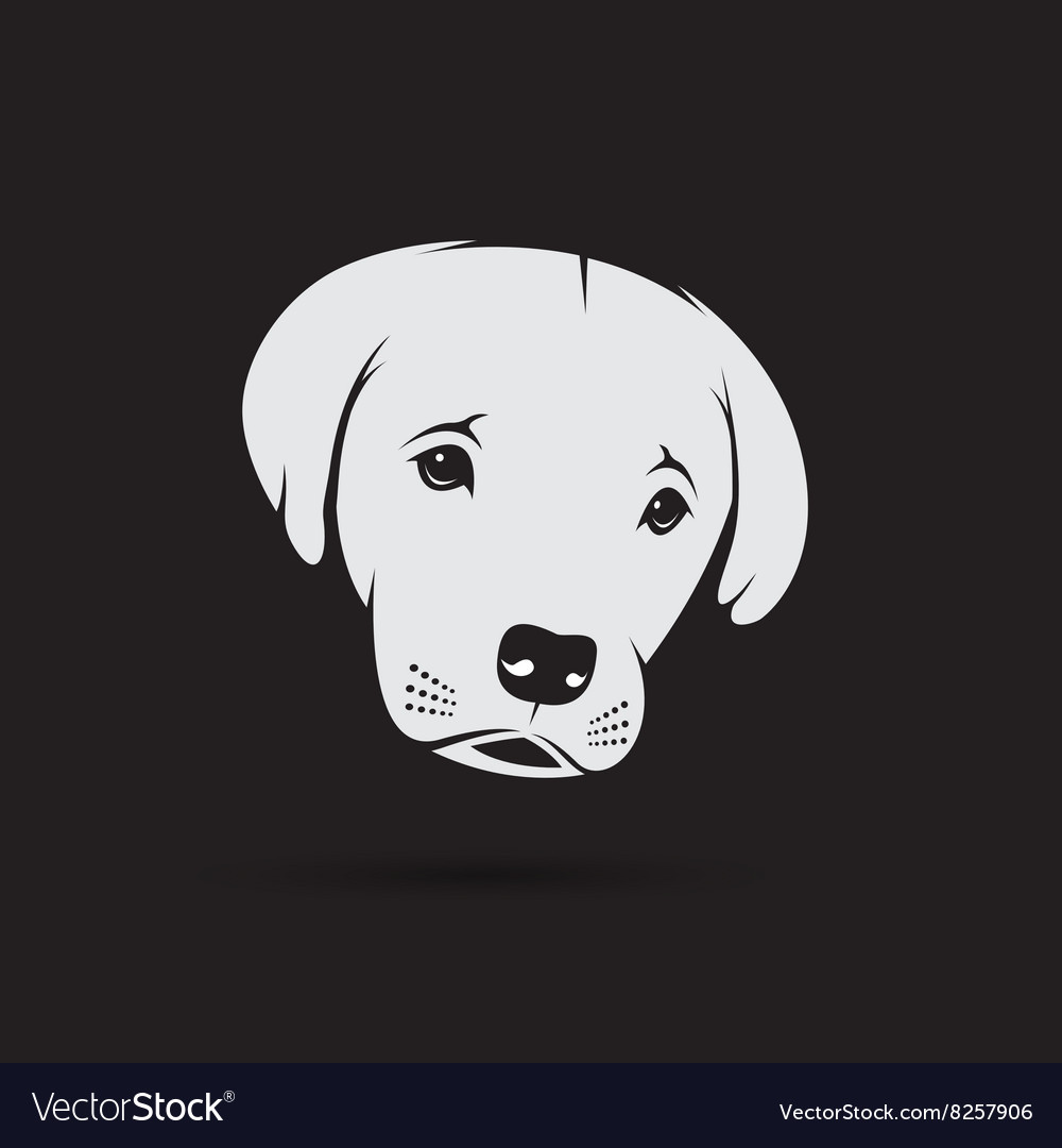 Image of an labrador puppy face vector