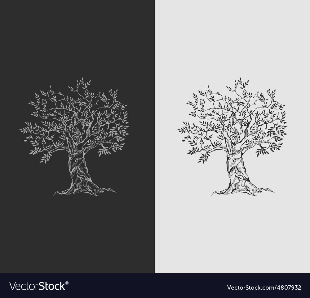 Olive tree on vintage paper vector