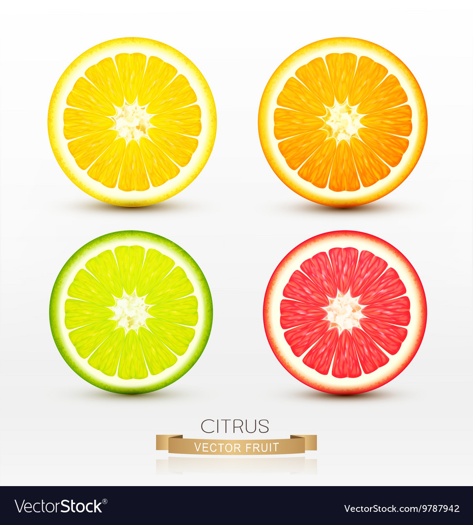 Slices of orange grapefruit lime lemon vector