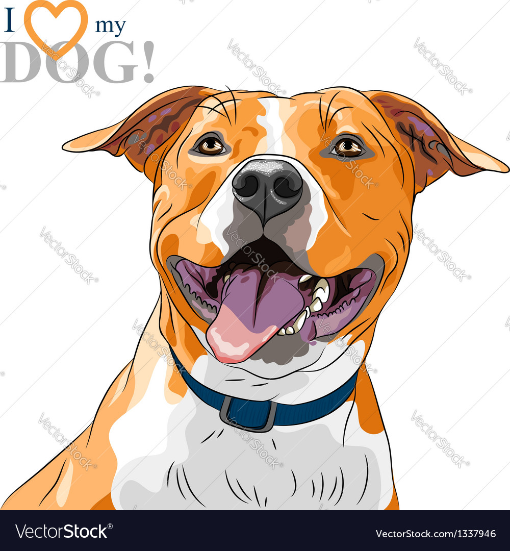 Sketch smiling dog american staffordshire terrier vector