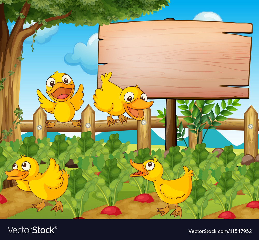 Garden scene with four ducks and sign vector