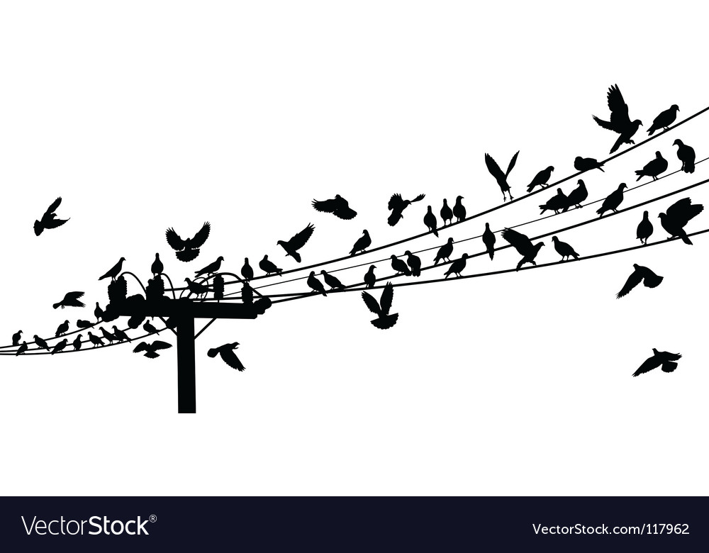Birds on the power lines vector